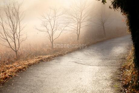朝霧に包まれた野原と熊野古道の写真素材 [FYI02661179]