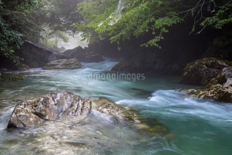 円原川の伏流水の流れの写真素材 [FYI02661329]