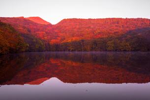 秋の蔦沼の朝焼けの写真素材 [FYI02661954]