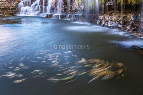 黒滝と回る木の葉の写真素材 [FYI02662008]