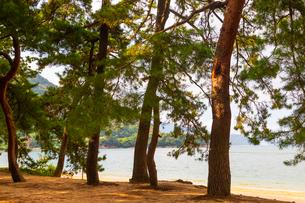 敦賀の気比の松原の写真素材 [FYI02662098]