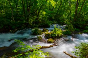 初夏の奥入瀬渓流の写真素材 [FYI02662316]