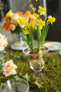 春の花のテーブルコーディネートの写真素材 [FYI02662633]