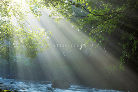 円原川伏流水の光芒と流れの写真素材 [FYI02662837]