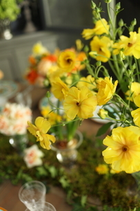 春の花のテーブルコーディネートの写真素材 [FYI02662939]