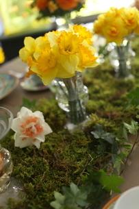 春の花のテーブルコーディネートの写真素材 [FYI02662990]