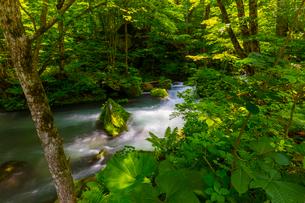 初夏の奥入瀬渓流の写真素材 [FYI02663237]