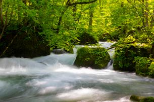 初夏の奥入瀬渓流の写真素材 [FYI02663303]
