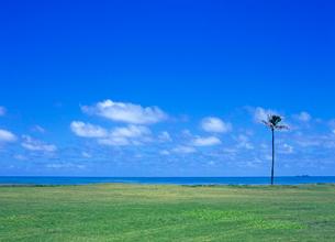 ワイアホレビーチパーク オアフ島 ハワイの写真素材 [FYI02663417]