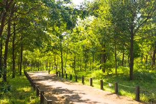 杉並区立柏の宮公園の写真素材 [FYI02663456]