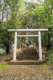 天岩戸神社東本宮参道の写真素材 [FYI02664407]