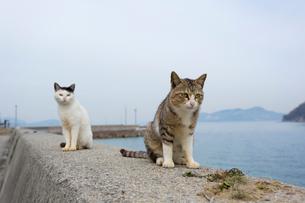 堤防のキジ白猫と黒白猫の写真素材 [FYI02664657]