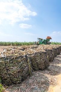 並べられた袋詰めサトウキビと収穫機を見るサトウキビ畑の写真素材 [FYI02664679]