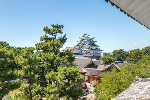 マツの木越しに名古屋城本丸御殿と大小天守を望むの写真素材 [FYI02664850]