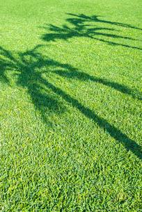 緑の芝生面にヤシの木の影を見るの写真素材 [FYI02664875]
