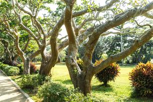 宮古島市熱帯植物園ディゴの並木の写真素材 [FYI02664885]