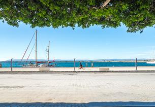 枝葉越しに見るオルティージャ島海辺の風景の写真素材 [FYI02664909]
