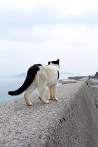 堤防を歩く黒白猫の写真素材 [FYI02664955]
