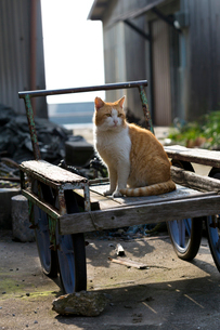 台車の上の茶白猫の写真素材 [FYI02664968]