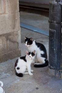 真鍋島の猫の写真素材 [FYI02664992]