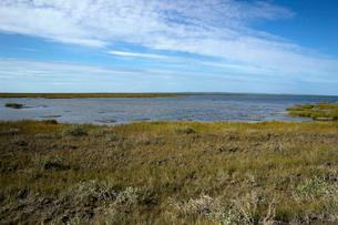 アラスカ 北極圏の湿地帯(WETLAND)の写真素材 [FYI02664993]