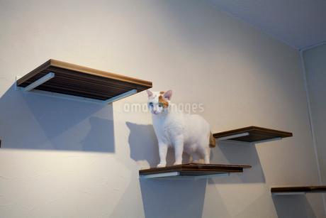 キャットウォークを歩く猫の写真素材 [FYI02664999]