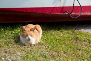 船の前で眠る茶白猫の写真素材 [FYI02665017]