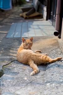 民家の前で寝そべるチャトラの写真素材 [FYI02665044]