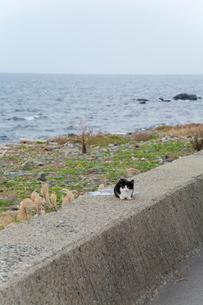 防波堤の上の黒白猫の写真素材 [FYI02665046]
