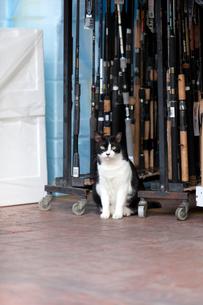 チャンギビレッジ、釣竿の前に座る黒白のネコの写真素材 [FYI02665103]