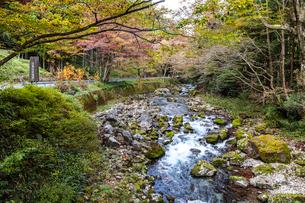 日本一の円原の伏流水を見る川の写真素材 [FYI02665104]
