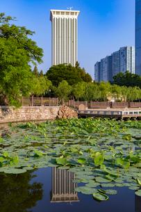 大連,労働公園の蓮池の写真素材 [FYI02665111]