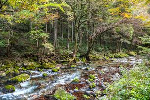 日本一の円原の伏流水を見る川の写真素材 [FYI02665144]
