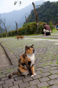 台湾、猫村、願景館前の歩道の写真素材 [FYI02665170]