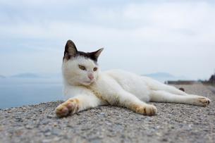 堤防でくつろぐ黒白猫の写真素材 [FYI02665196]