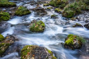 日本一の円原の伏流水を見る川の流れの写真素材 [FYI02665229]