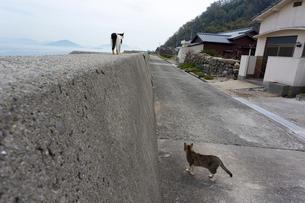 堤防を歩く黒白猫の写真素材 [FYI02665236]