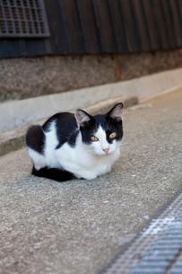 真鍋島の猫の写真素材 [FYI02665274]