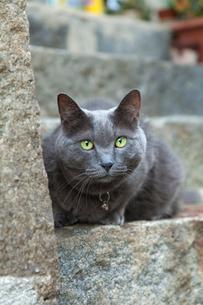 尾道の猫の写真素材 [FYI02665282]