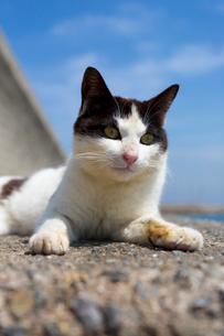 青空と黒白猫の写真素材 [FYI02665288]