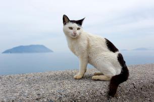 堤防の黒白猫の写真素材 [FYI02665384]