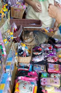 台湾、猫村、グッズショップに座るネコの写真素材 [FYI02665386]