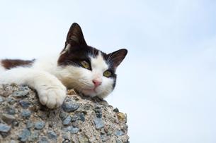 堤防の黒白猫の写真素材 [FYI02665393]