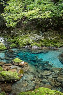 日本一の円原の伏流水を見る川の写真素材 [FYI02665401]