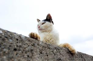 堤防の黒白猫の写真素材 [FYI02665477]