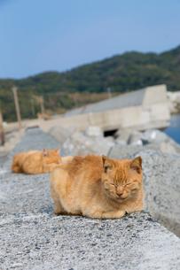 堤防で熟睡する2匹の茶トラ猫の写真素材 [FYI02665638]