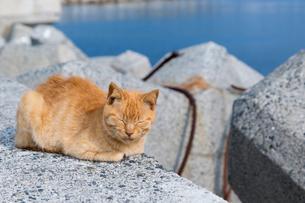 堤防で熟睡する茶トラ猫の写真素材 [FYI02665654]