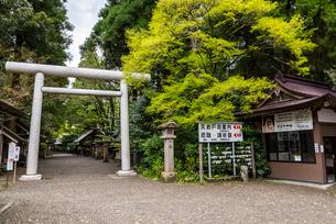 天岩戸神社西本宮鳥居を見る風景の写真素材 [FYI02665659]