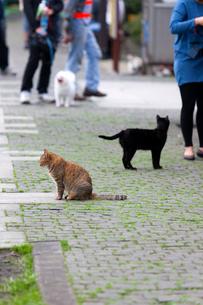 台湾、新北市の猫村の写真素材 [FYI02665704]