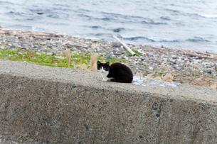 防波堤の上の黒白猫の写真素材 [FYI02665749]